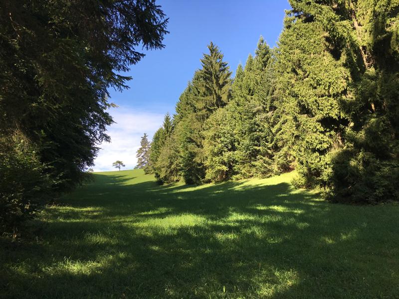 Wald und Wiesen auf dem Randen