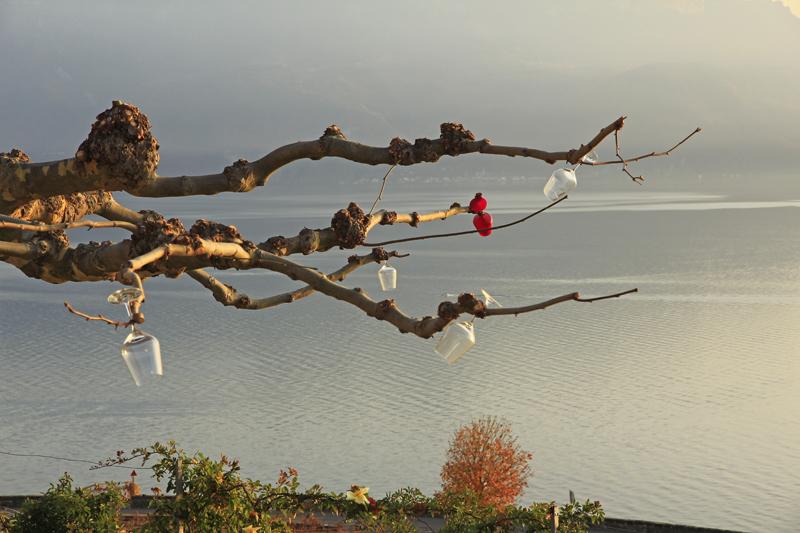 Auch das gibt es unterwegs: geschmückte Bäume nach Art des Lavaux