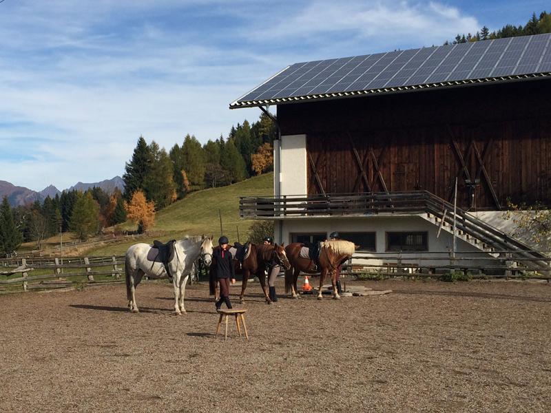 Die Pferdekoppel – der sichere Ort für Reitunerfahrene