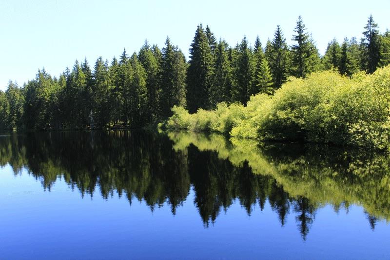 Viel Grün und Blau fürs Auge: der Etang de Gruère im Jura